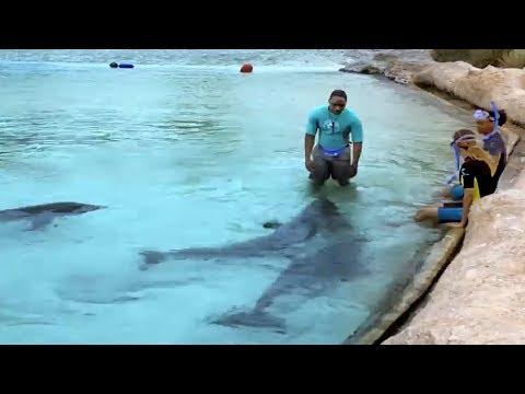 Swim In Wonder At Dolphin Cay Atlantis