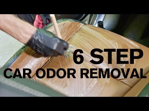 How to Remove Car Odors in 6 Steps