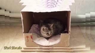 Самый простой домик для кота или кошки