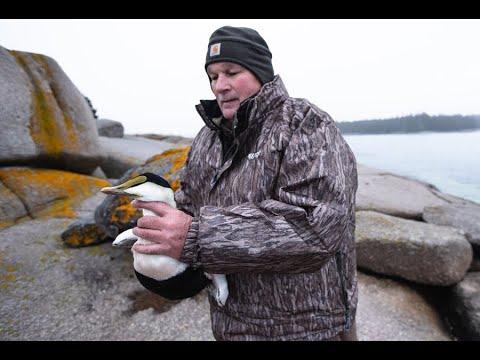Riding The Rocks For Maine Sea Ducks