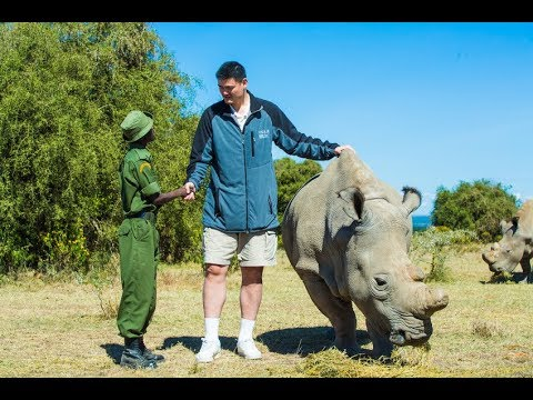Last male northern white rhino visited by Yao Ming