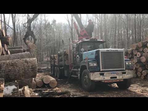 #mack #superliner #logtruck Loud Pipes Loading Logs!