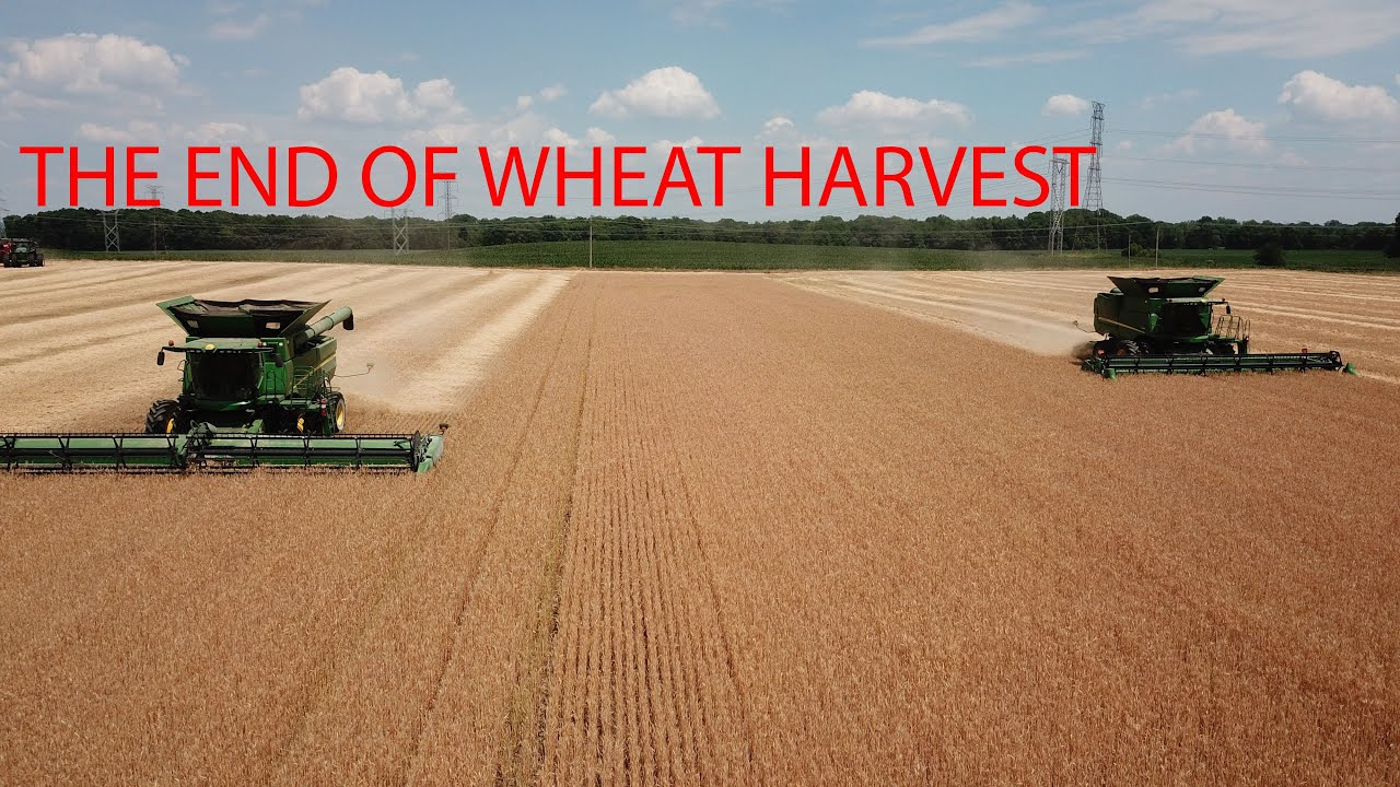 The end of wheat harvest