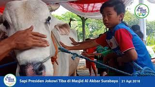 Download Video SAPI JOKOWI TIBA DI MASJID AL-AKBAR - IDUL ADHA 2018 MP3 3GP MP4