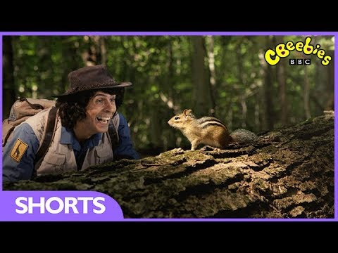 CBeebies | Andy's Safari Adventures | The Chipmunk