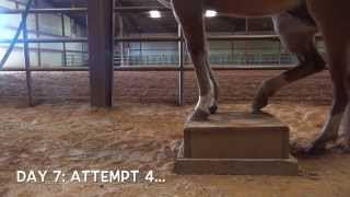 A Horse Learning To Balance On A Box