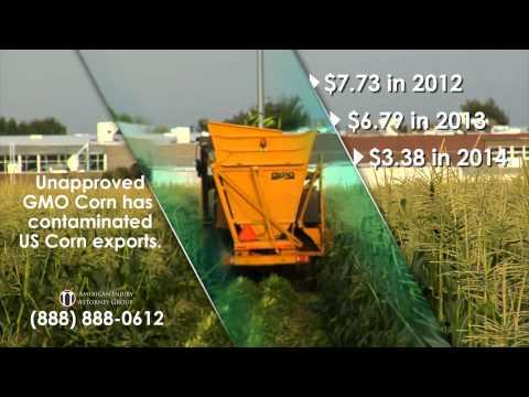 Syngenta GMO Corn Lawsuits