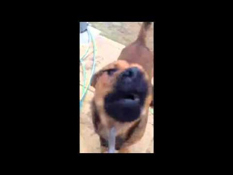 Dog Rapping Busta Rhymes