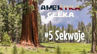 Sekwoje: największe czy najwyższe drzewa? 🌳🌲 Ameryka Dla Geeka #5