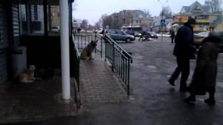 Собаки, м-он Гоголя, 27,  29.12.2013(, 2014-01-04T11:55:28.000Z)