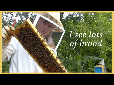 Honey Bees – Inspecting and Learning – GSB S2 E2