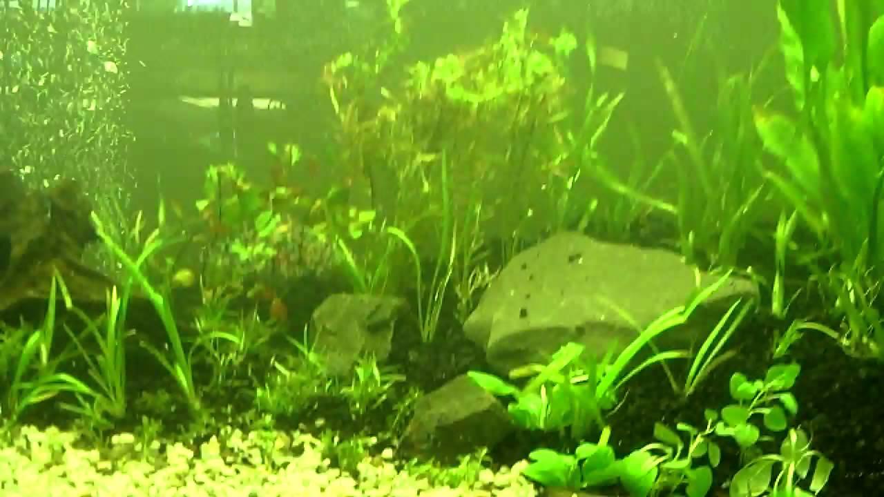 My 90 Gallon Natural Dirted and Planted Fish Tank Aquarium   YouTube
