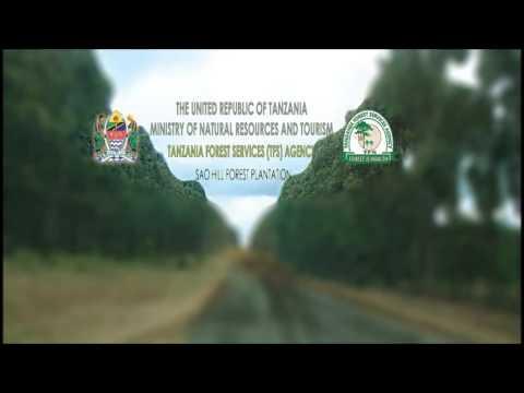 Sao Hill Forest Plantation