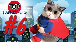 ЛУЧШИЕ ПРИКОЛЫ 2019/РЖАКА/ТОП СМЕШНЫХ ВИДЕО С КОТАМИ/Смешные животные/Смешные кошки/TOP FUNNY PETS 6