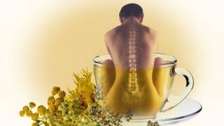 Остеохондроз лечение травами(Лечение травами остеохондроза применяется как противовоспалительные и обезболивающие. Травы от остеохон..., 2015-12-16T13:17:01.000Z)