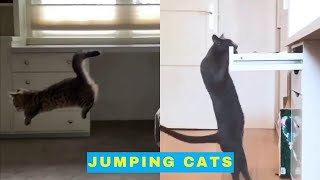 Cats Jumping  Funny Videos of Jumping Cats