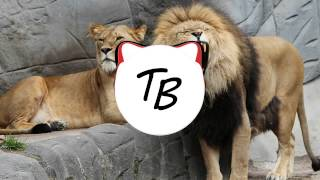 The Tokens - The Lion Sleeps Tonight (Notorious TRP Remix) [That Bass boosted]