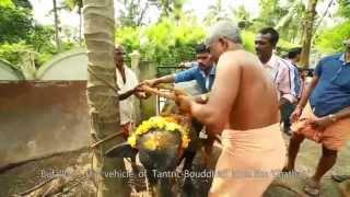 Documentary-pothottonam (പോത്തോട്ടോണം).