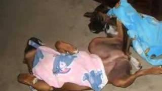 Ali A Boxer Rescue Sucess