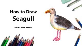 How to Draw a Seagull with Color Pencils [Time Lapse]