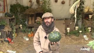 Moon and Stars, une pastèque à cultiver partout en France.