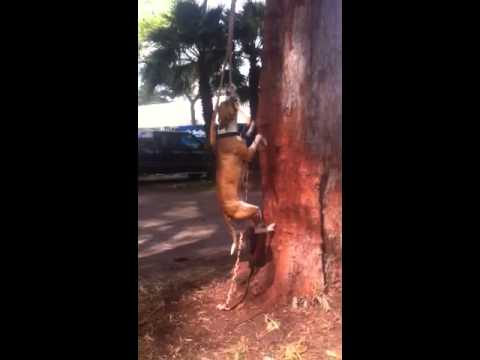 Dog swinging on a vine