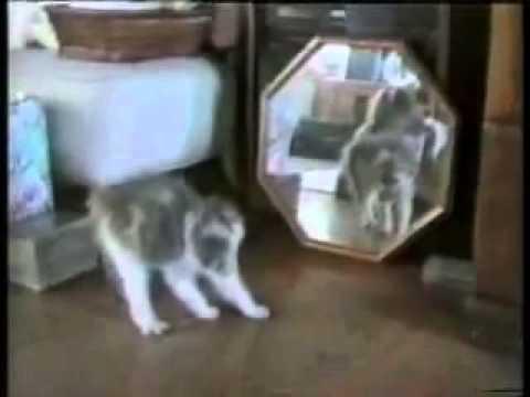 פספוסי חתולים קורעים מצחוק חובה צפייה