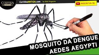 Conheça o Mosquito da Dengue - Aedes Aegypti - História do Mosquito e Origem