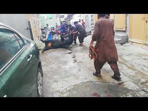 Danger Bull Bhag gya 2k18 Qurbani ky Time  A.S 