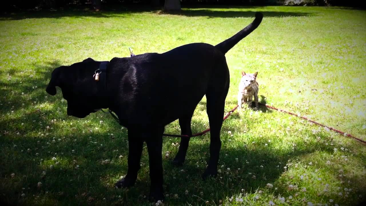 Cane corso jemma from 6 weeks up too 9 months youtube cane corso jemma from 6 weeks up too 9 months geenschuldenfo Gallery