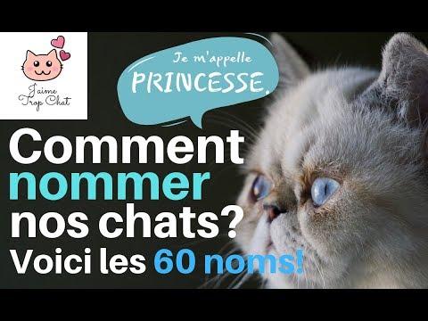 🐱Les 60 Noms De Chats Les Plus Populaires En France! 🐱Quel Nom Choisir Pour Votre Chat 🐱?