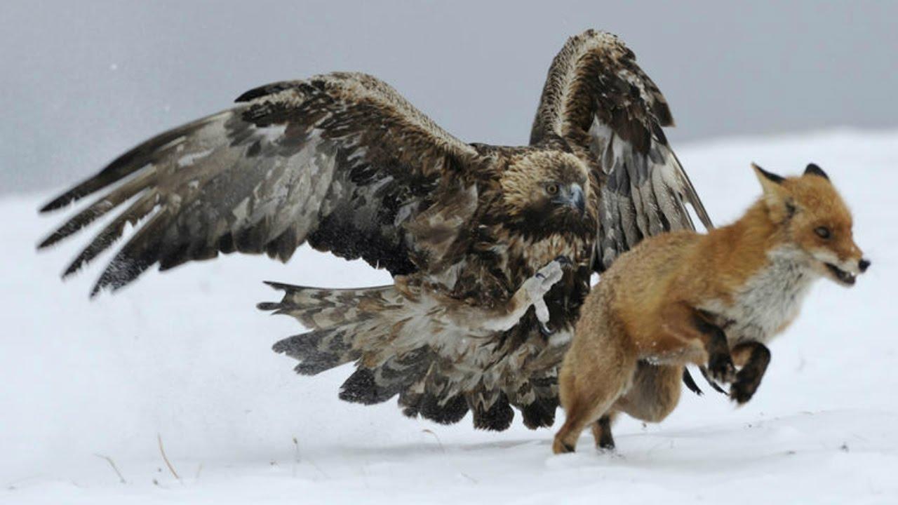 Las 5 Aves Más Veloces Del Planeta Youtube