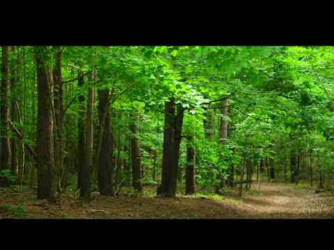 Sandy Hills Pinery Trail, Elmira Ontario