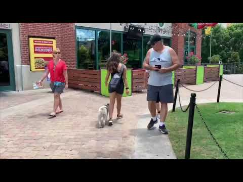 Sophia The Wire Haired Fox Terrier | Best Dog Training | Off Leash K9 | Board And Train | Oklahoma