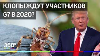 Тараканы Дональда Трампа и клопы Майами. Какие насекомые ждут участников G7 в 2020