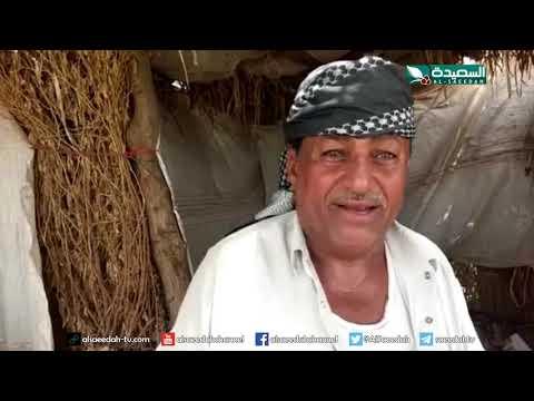 تقرير : الأسوار الطينية من سمات وادي تهامة (12-7-2019)