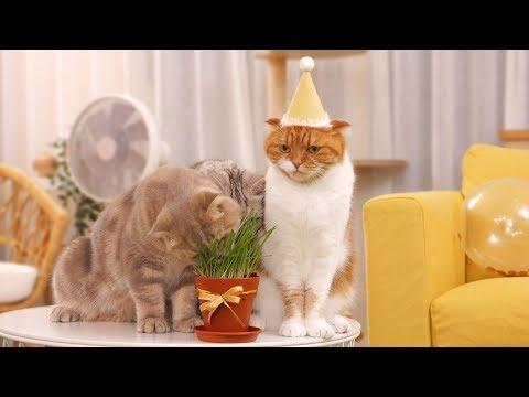 고양이 노을이의 생일에 캣그라스 케이크를 선물했어요