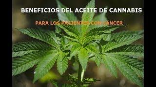 Beneficios del aceite de cannabis para los pacientes con cancer