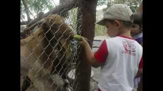 Эти животные не едят бананы)))