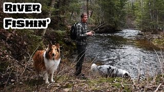 Spring Fishing in a Small River with My Dogs