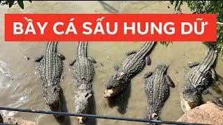 Bầy cá sấu hung dữ khiến Khương Dừa muốn rớt tim khi cho ăn!!!