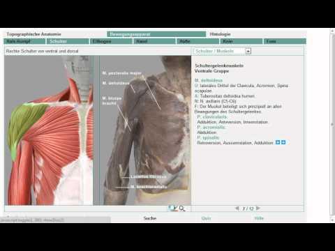Anatomie: Schultermuskeln 8/11 (Grobe Übersicht!) - YouTube