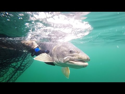 Great Bear Lake NWT – Fishing 50 Pound Lake Trout – GoPro 1080
