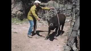 Rancho Vella Vista Abasolo Rodeo Durango