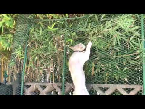 Houdini Cat escapes again