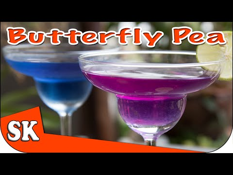 butterfly-pea-tea---miracle-health-drink---clitoria-ternatea
