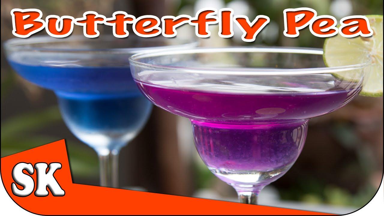 butterfly pea tea - miracle health drink - clitoria ternatea - youtube