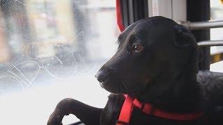 Full Frame Close Up: Cruisin' Canine