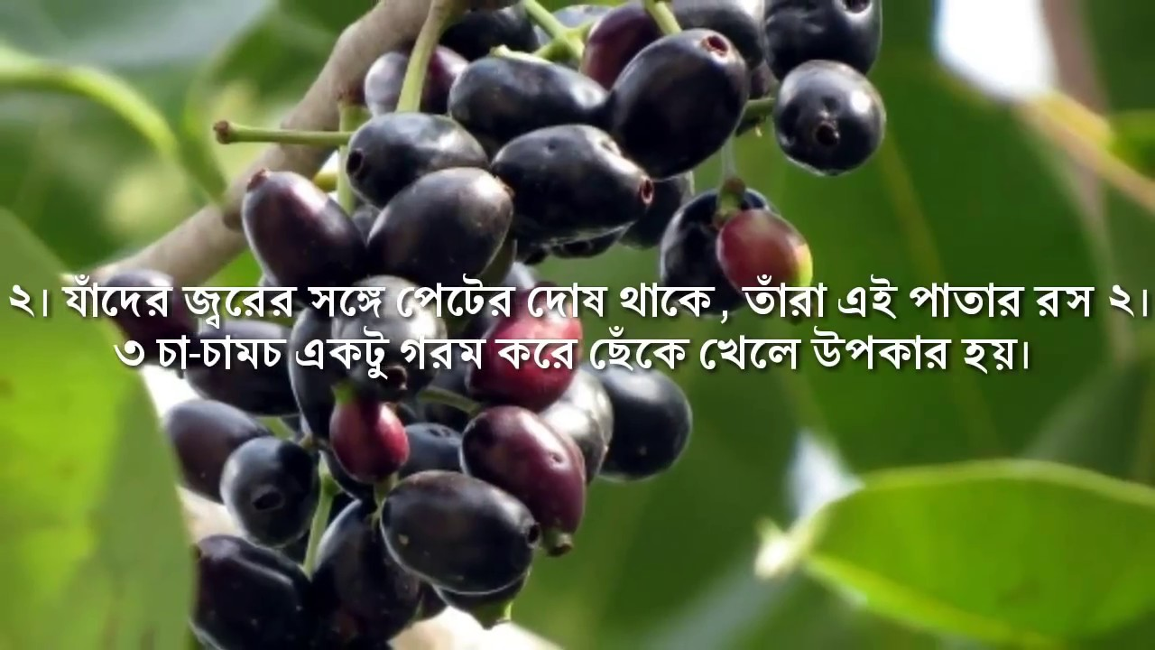 Knowledge duniya About blueberry in bengali