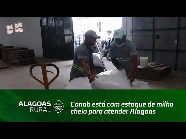 Conab está com estoque de milho cheio para atender Alagoas até o fim de 2021